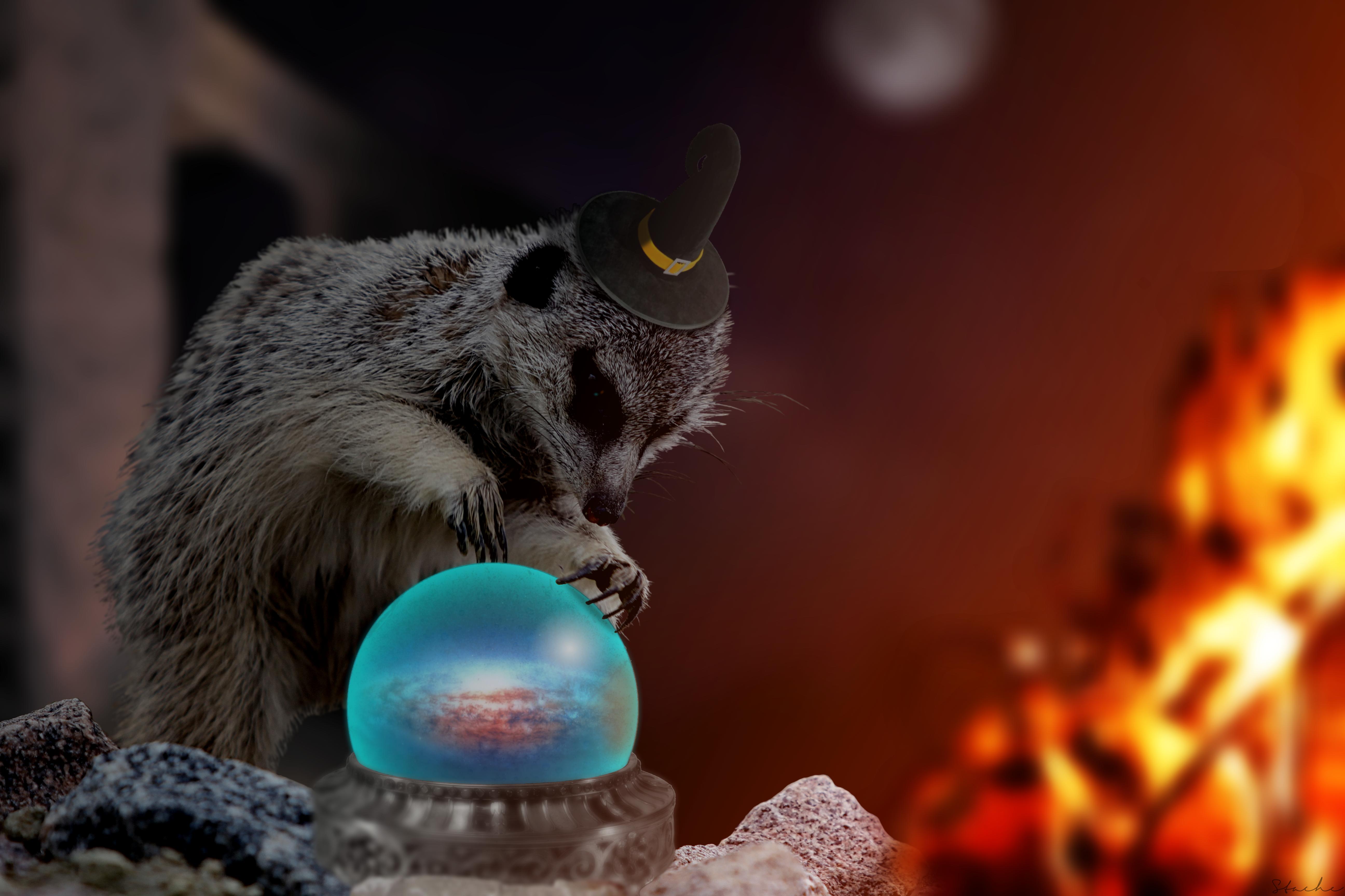 Magical Meerkat